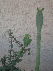 קישקשתא צופה על הגינה
